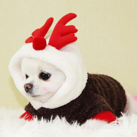 rddpetshop 寵物服飾